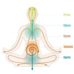ᐅ Les 5 Prana Vayus : Que sont-ils ? Tout savoir !